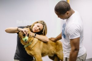School for Dog Trainers