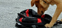 detection dog training