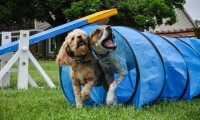 Importance of a Dog Training School