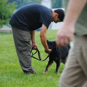 dog trainer school instructors
