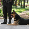 Police K9 Trainers Can Benefit from a Professional School