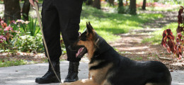 police k9 trainers