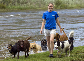dog trainer job colorado
