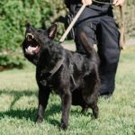 police k9 trainer course patrol dog training