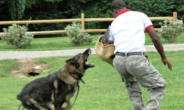 Nigerian Army Commissions New Working Dog Center School For Dog
