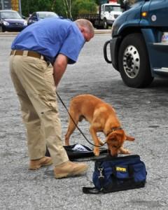 dog trainer job