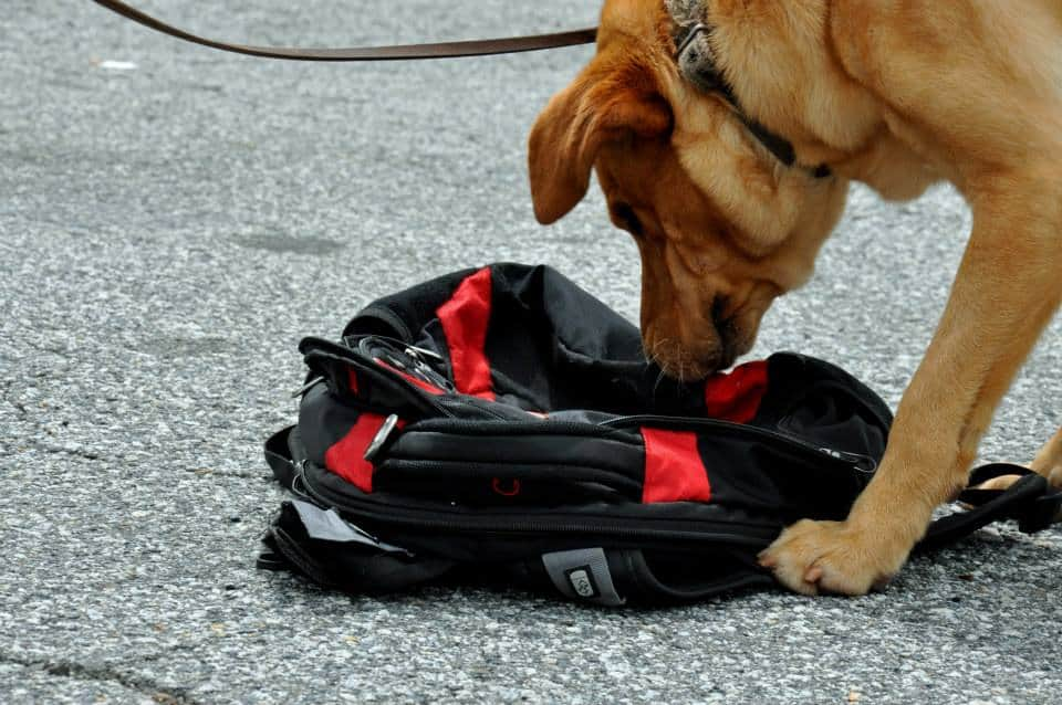 Start a Detection Dog Business - Become a Professional Dog
