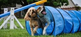 dog trainer school
