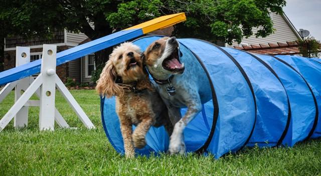 Importance of a Dog Training School