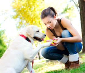 dog trainer school programs