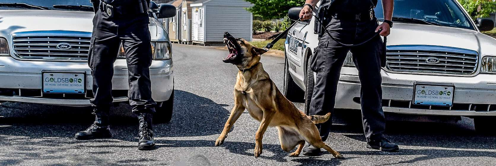 best police k9 trainer course usa