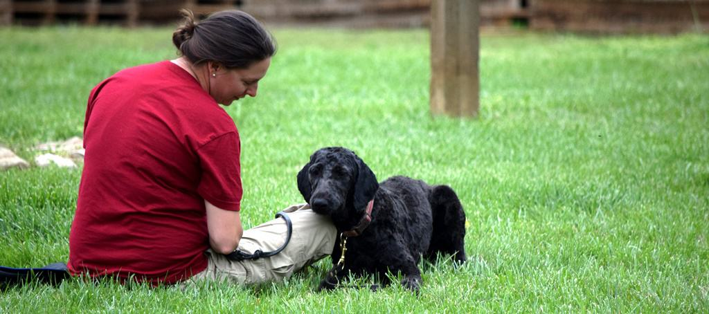 service dog trainer school topics