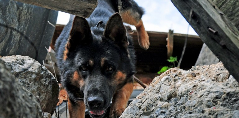 Search & Rescue Dog Trainer Course