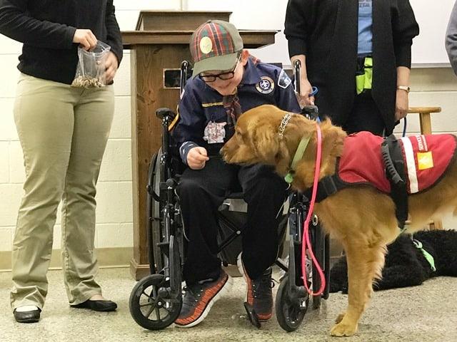 service dog trainer school - learn to train service dogsservice dog ...