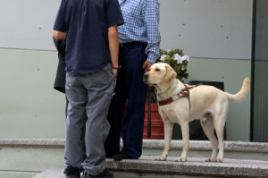 service dog trainer course for GI Bill
