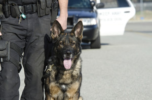 We accept GI Bill for our Police K9 Trainer Course