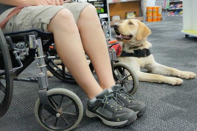 service dog trainer school program