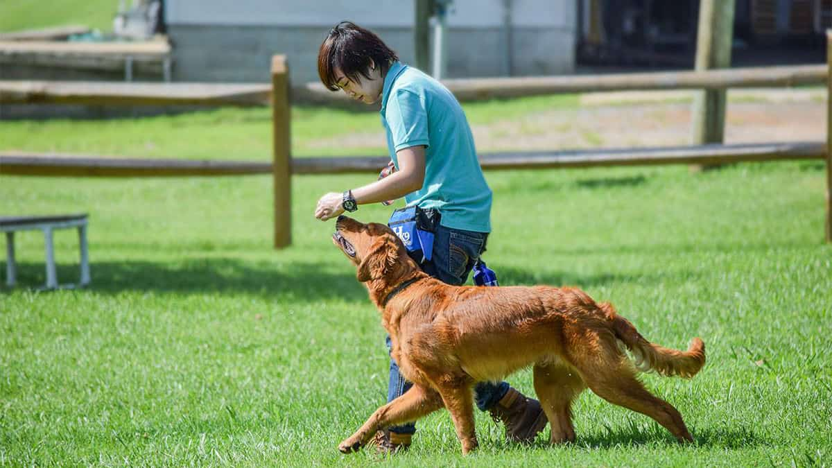 unbeatable dog trainer school programs