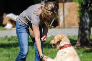 master dog trainer school