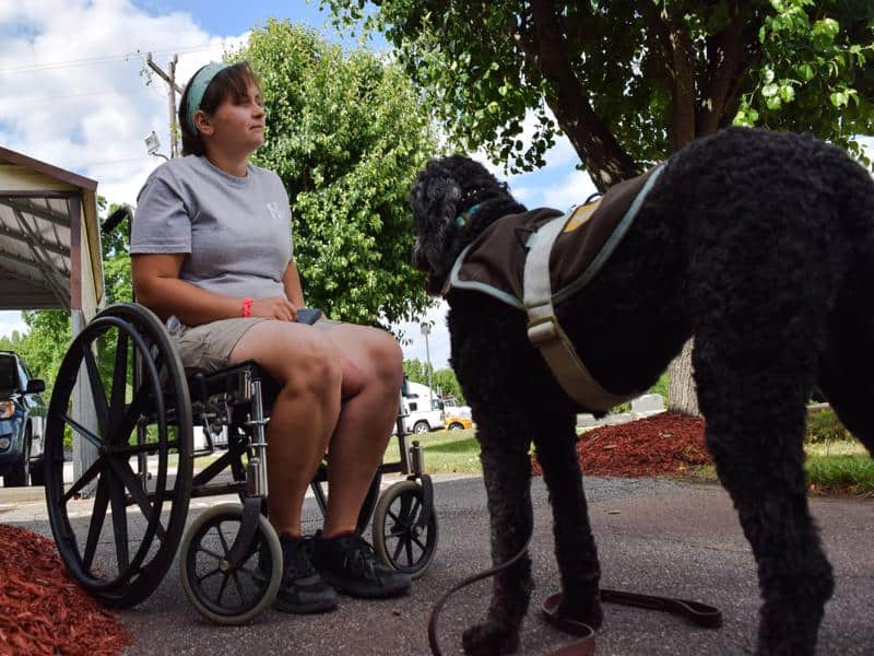 service dog trainer course