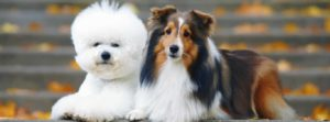 Importance of training various dog breeds