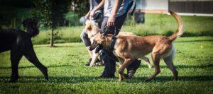 should i become a dog trainer