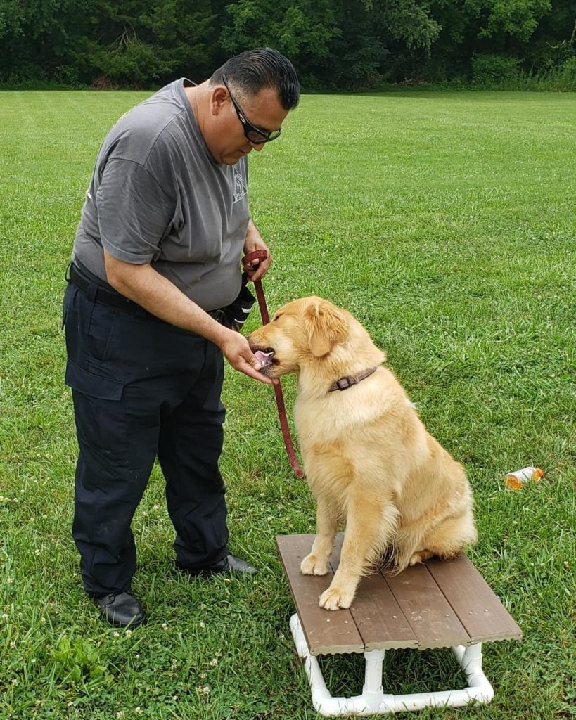 dog being trained on place