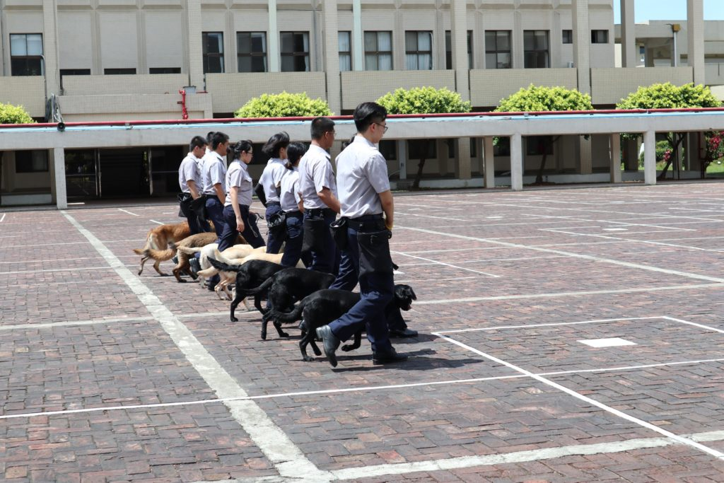 dog owners in taipei training dogs
