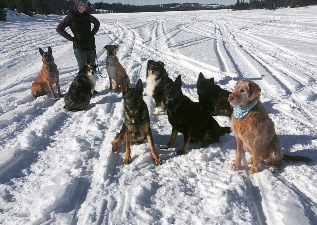 rebekah collins in alaska with dogs