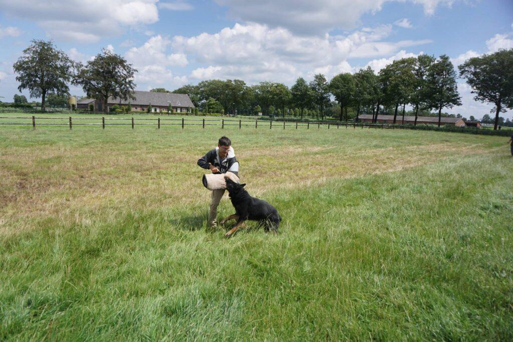 james leung hong kong dog trainer decoying