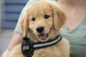 appalachian dog training mills creek nc