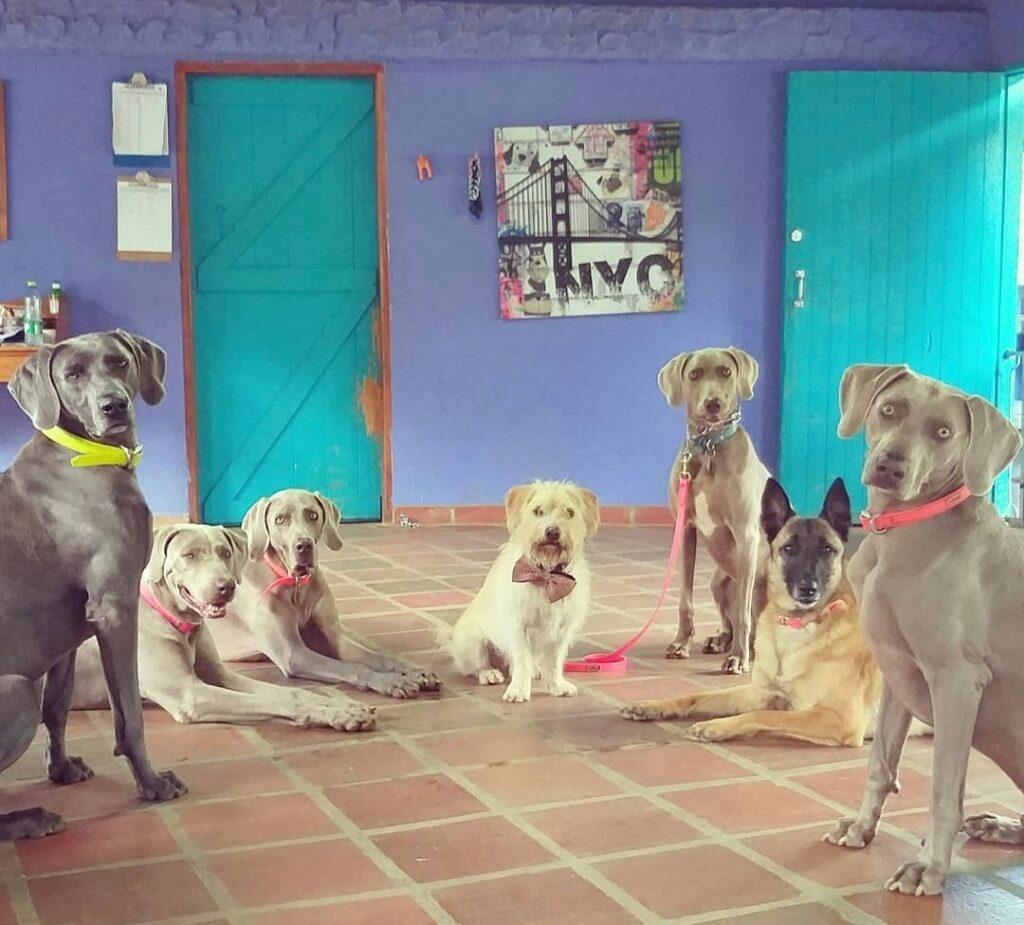 dogs trained by camila jaramillo