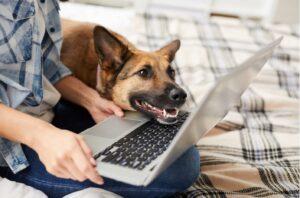 dog training business and marketing