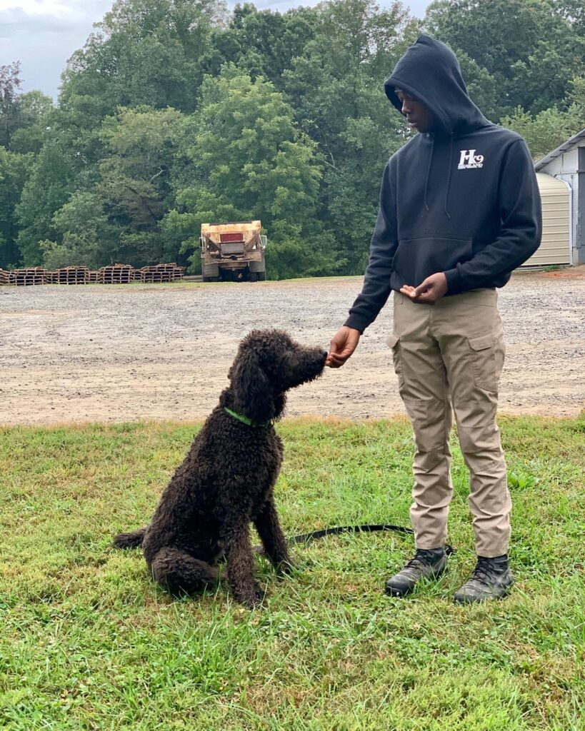 dog getting treat from trainer